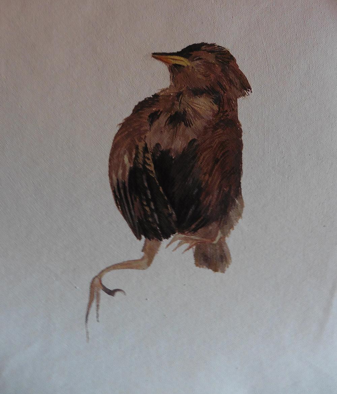 Poor-bird-4