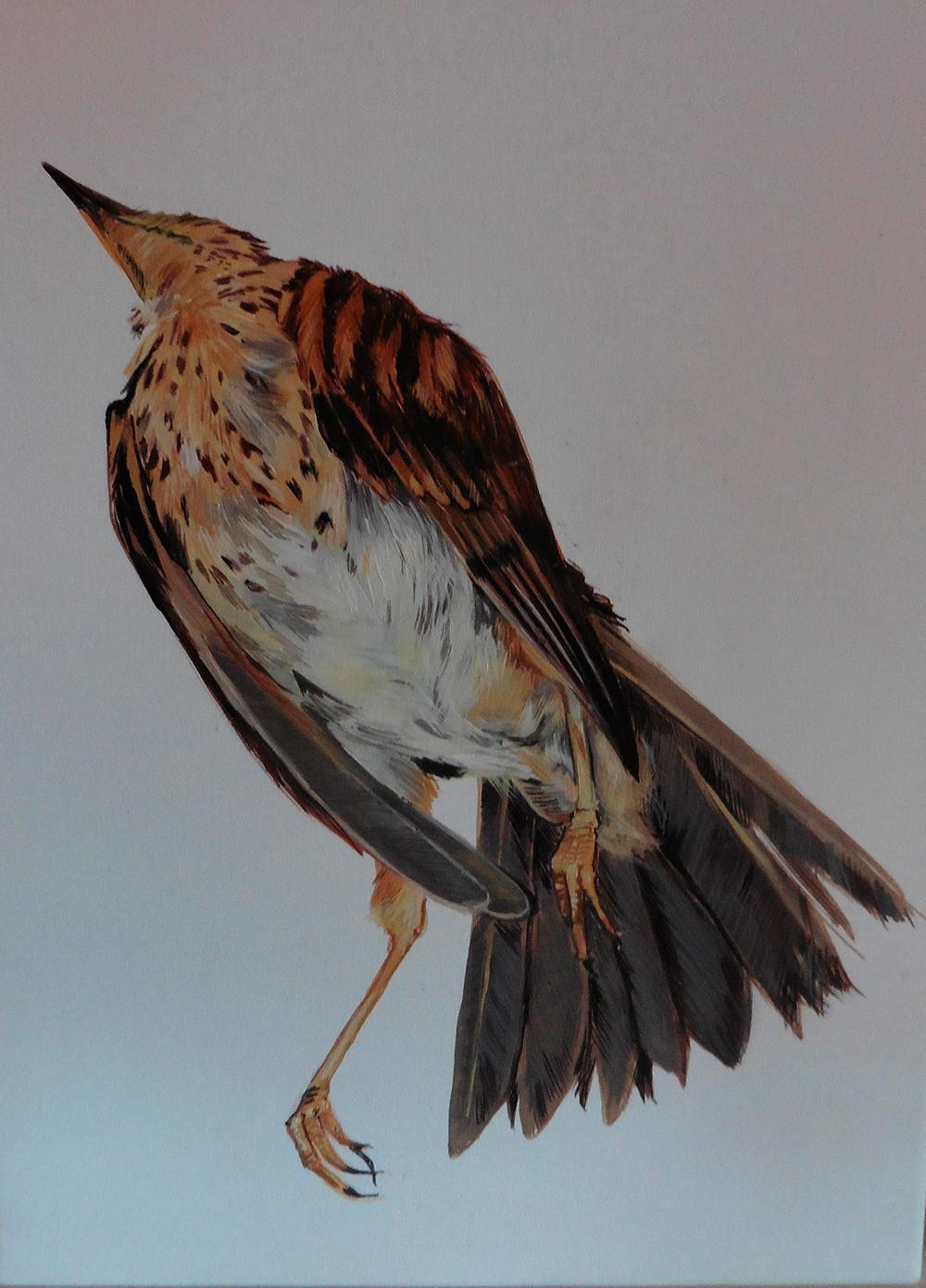 Poor-bird-5